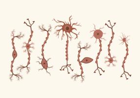 Set von Neuron Vektor
