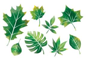 Blätter im Aquarell / Hojas im Aquarell