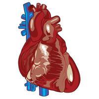 färg mänskligt hjärta diagram vektor