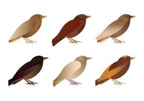 Vektor Vogel Sammlung