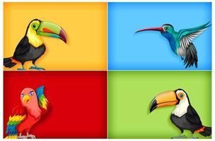 vilda fåglar på färgad bakgrund vektor