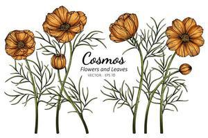 gezeichnete botanische Illustration der Hand des orange Kosmos vektor