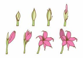 Wachsen Blumen-Set vektor