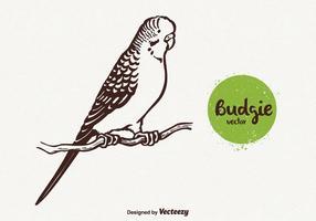 Kostenlose Budgie Vektor-Illustration vektor
