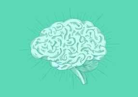 Helle Hand gezeichnete Gehirn Vektor