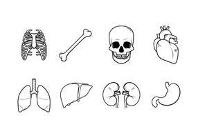 Gratis mänskliga inre organ Vector