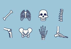 Gratis mänsklig skelettvektor