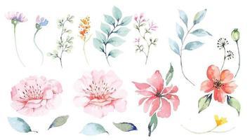 uppsättning av blomblad och blomma akvarell design
