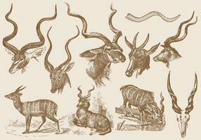 Kudu-Zeichnungen vektor