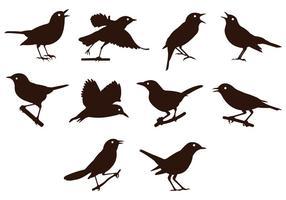 Nightingale Silhouetten Vektor
