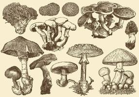 Vilda svampar vektor