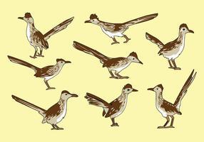 Free Roadrunner Vogel Vektor