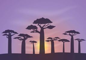 Freier Baobab Hintergrund Vektor