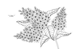 handgezeichnete botanische lila Blume und Blätter vektor
