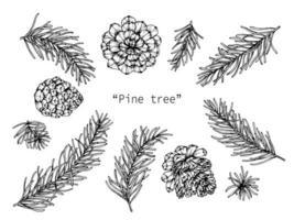 handgezeichnete botanische Kiefer und Blatt