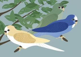 Budgies vektor illustration