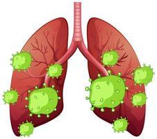 mänskliga lungor och coronavirusceller på vit bakgrund