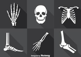 Mänsklig skelett vektor uppsättning