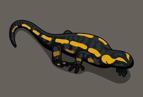 Feuersalamander Salamandra Salamandra illustriert von Charles Dessalines D39 Orbigny 1806-1876. digital erweitert aus unserer eigenen Ausgabe von 1892 des Dictionnaire Universel D39 Histoire Naturelle. vektor