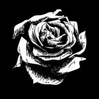 ros ritning blomma natur vektor ikon på svart bakgrund