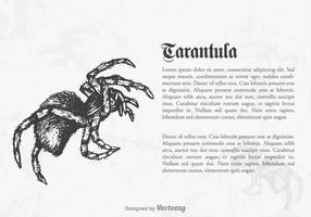 Gratis Vector Tarantula Illustration