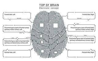 Gehirn-Infografik im Schwarz-Weiß-Technologie-Stil