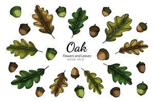 handritad samling av eknötter och blad vektor