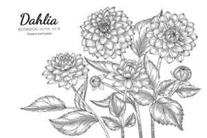 handritad dahliablomma och blad vektor