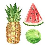 Aquarell-Set der tropischen Früchte