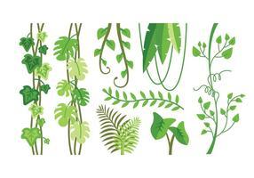 Tropiska växter vektorer