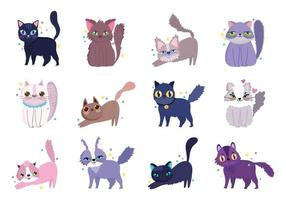 blandade söta katter