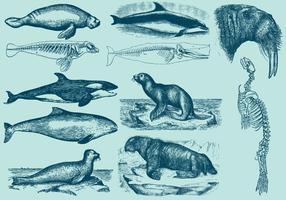 Vattenlevande däggdjur