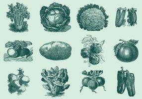 Weinlese Gemüse
