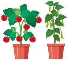 färska tomater och gröna ärtor vektor