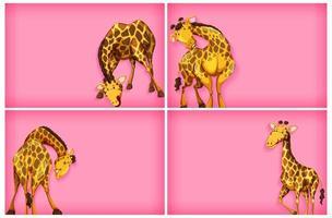 Schablonendesign mit rosa Wand und Giraffen vektor