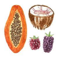 papaya, kokosnöt, björnbär, hallon akvarell uppsättning