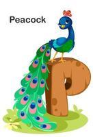 p för påfågel 2