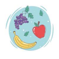 Satz frisches Obst vektor