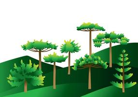 Araucaria träd vektor
