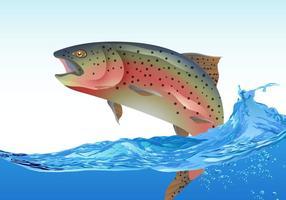 Rainbow Trout Hoppning vektor