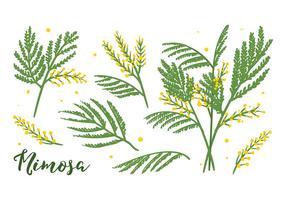 Mimosen Blumen Vektor