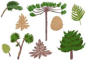 Gratis barrträd vektorer