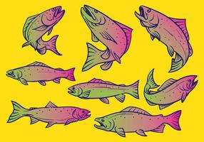 Forelle Fisch Vektor-Illustration vektor