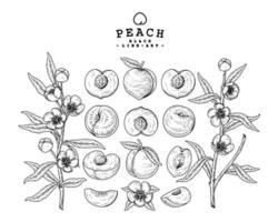 Pfirsich dekoratives Set vektor