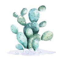 kaktus målad med akvareller vektor