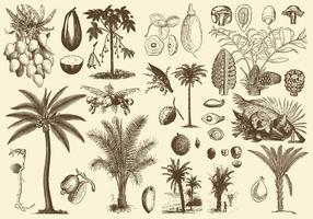 Palmfrukter och frön vektor