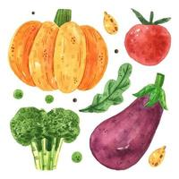 Kürbis, Tomate, Brokkoli, Aubergine.