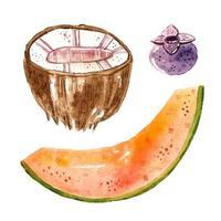 kokosnöt, melon, blåbär.