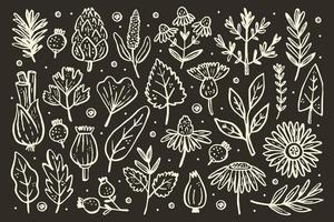 örter stor uppsättning. skogsväxter. blomma, gren, blad, humle, kon.
