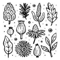 trädgård vilda växter. vektor